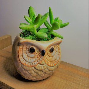 Other - Sedum Succulent in Ceramic Owl Planter 3""
